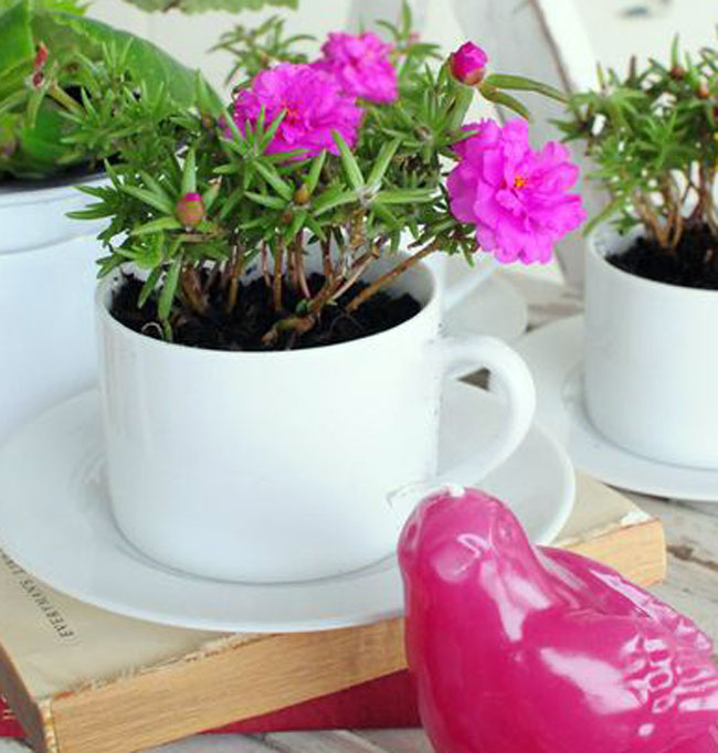 Цветы из чашки в блюдце своими руками